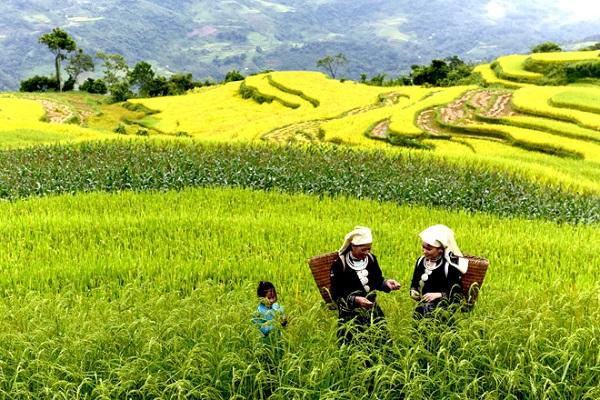 Đến Tuyên Quang ghé thăm ruộng bậc thang Hồng Thái - Hình 1