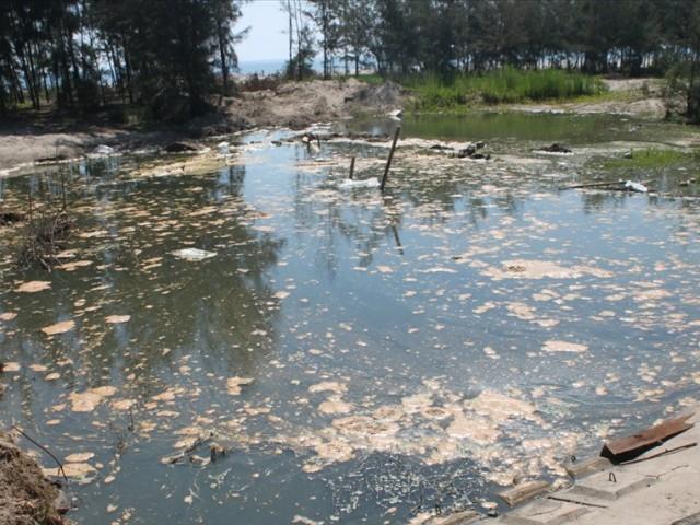Hà Tĩnh: Công ty Tiến Đạt bị phạt nặng vì gây ô nhiễm môi trường - Hình 1