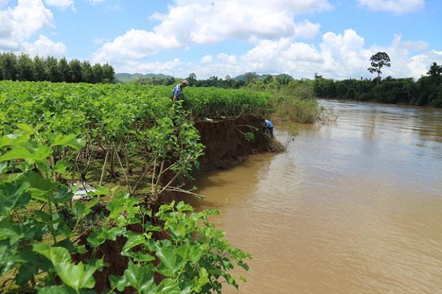 Dân 'tố' nhiều đất vườn lại trôi sông Đồng Nai sau khi tàu hút cát tái xuất - Hình 1