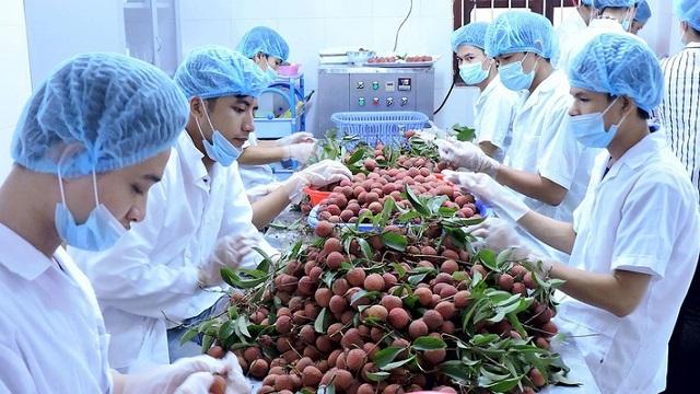 Khơi nguồn nông sản Việt - Hình 1
