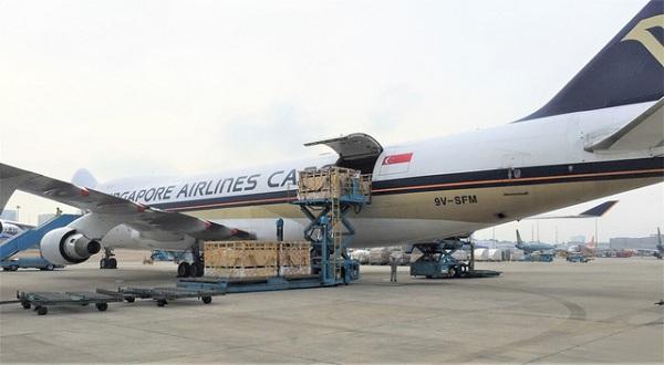 200 cô bò sữa hữu cơ 'cưỡi' máy bay từ Úc về Việt Nam - Hình 1