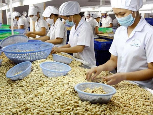 Năm 2018: Xuất khẩu điều của Việt Nam đứng số 1 thế giới - Hình 1