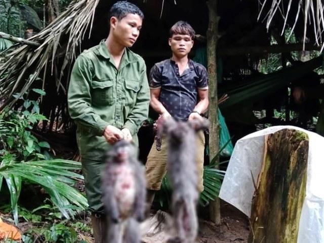 Nghệ An: Cần xử lý nghiêm nhóm thợ săn bắn chết hai cá thể Voọc xám quý hiếm - Hình 1