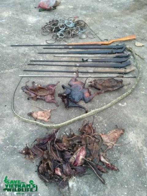 Nghệ An: Cần xử lý nghiêm nhóm thợ săn bắn chết hai cá thể Voọc xám quý hiếm - Hình 2