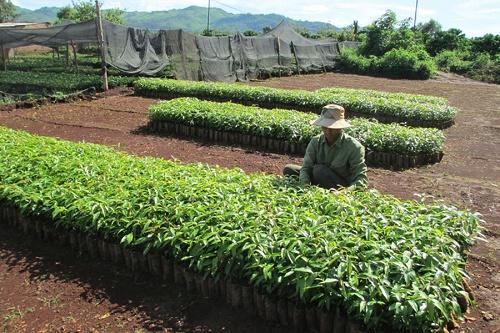 Bộ NN&PTNT: Thêm 67 giống cây trồng được phép sản xuất, kinh doanh - Hình 1