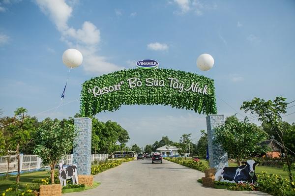 """'Resort"""" bò sữa Vinamilk Tây Ninh: Ngôi nhà lý tưởng của những cô bò hạnh phúc - Hình 3"""