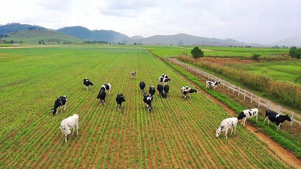 Vinamilk hợp tác với Lào và Nhật xây dựng tổ hợp 'resort' bò sữa organic tại Lào - Hình 6