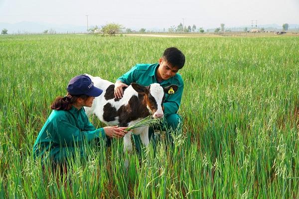 Vinamilk hợp tác với Lào và Nhật xây dựng tổ hợp 'resort' bò sữa organic tại Lào - Hình 7