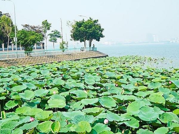 Hà Nội: Chấn chỉnh việc chụp ảnh phản cảm tại các ao sen ở hồ Tây - Hình 1
