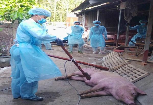 TP. HCM tiêu hủy 122 con lợn bị nhiễm bệnh dịch tả châu Phi - Hình 1