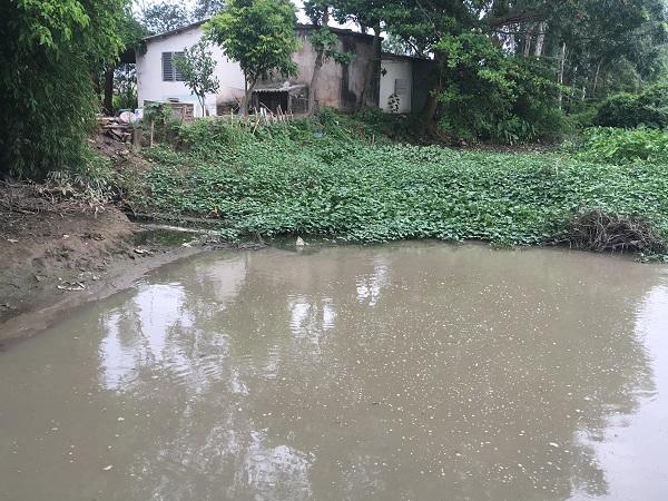 Hải Dương: Nguồn nước đầu vào cho nhà máy nước sạch nguy cơ bị ô nhiễm - Hình 3
