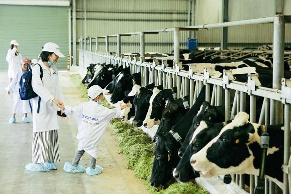 Trang trại bò sữa hiện đại của Vinamilk