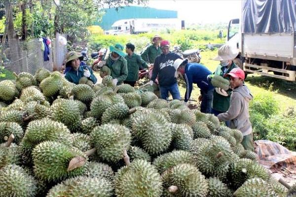 Giá mít Thái tại nhiều địa phương vùng ĐBSCL giảm do Trung Quốc siết nhập khẩu