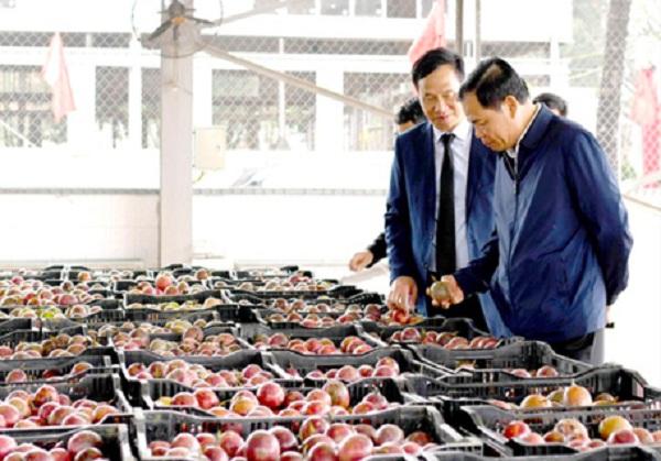 Bộ trưởng NN&PTNT Nguyễn Xuân Cường kiểm tra vùng nguyên liệu         và nhà máy chế biến rau quả ở Ninh Bình.