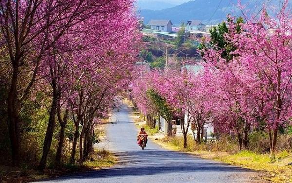 Thành phố tràn ngập trong sắc hoa rực rỡ