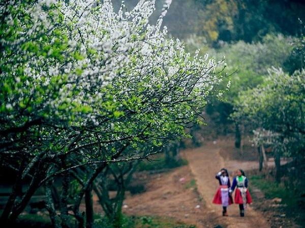 Con đường ngập hoa trên Mai Châu