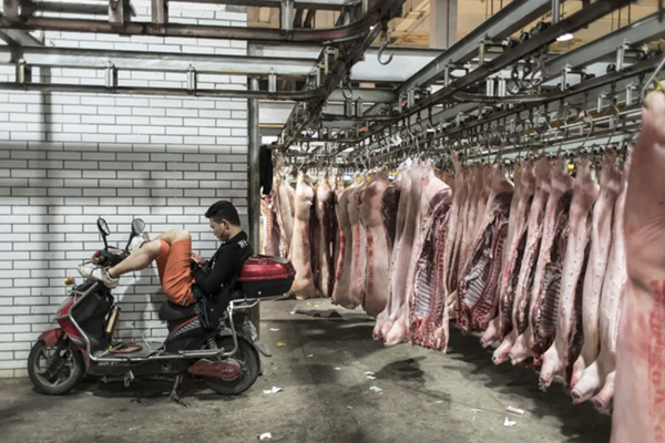 Người đàn ông ngồi trên chiếc xe máy bên cạnh những con lợn vừa được mổ tại chợ bán buôn ở ngoại ô Thượng Hải (Ảnh: Bloomberg)