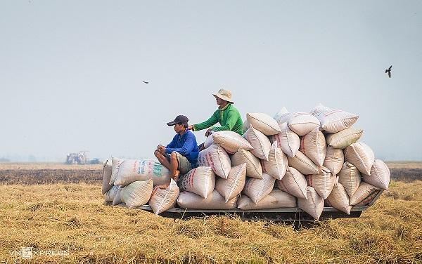 Nhiều doanh nghiệp xuất khẩu gạo ở Cần Thơ gặp nhiều khó khăn do lượng hàng tồn tại kho và cảng lớn
