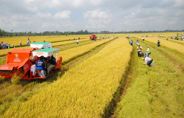 Đề xuất miễn thuế đất nông nghiệp đến năm 2025