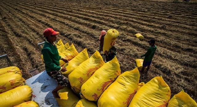 Xuất khẩu gạo phải vừa đảm bảo an ninh lương thực về lâu dài nhưng vẫn đáp ứng được các yêu cầu của thị trường, thu nhập và đời sống của nông dân cũng như các doanh nghiệp kinh doanh lương thực.