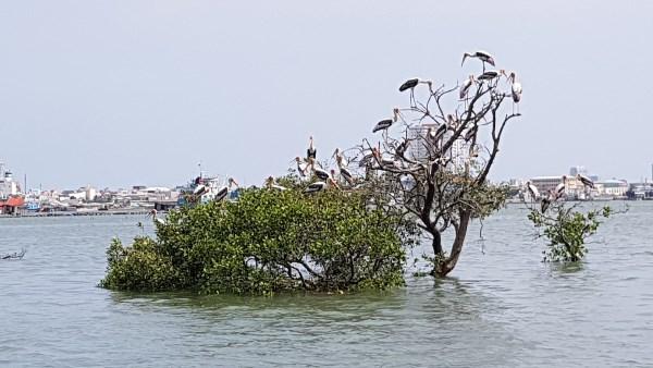 Phong cảnh thiên nhiên tuyệt đẹp Vũng Tàu Marina