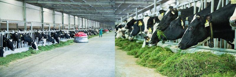 Trang trại bò sữa Vinamilk Tây Ninh ứng dụng cách mạng số 4.0 toàn diện và công nghệ hiện đại của Mỹ, Nhật, Châu Âu trong chăn nuôi và quản lý