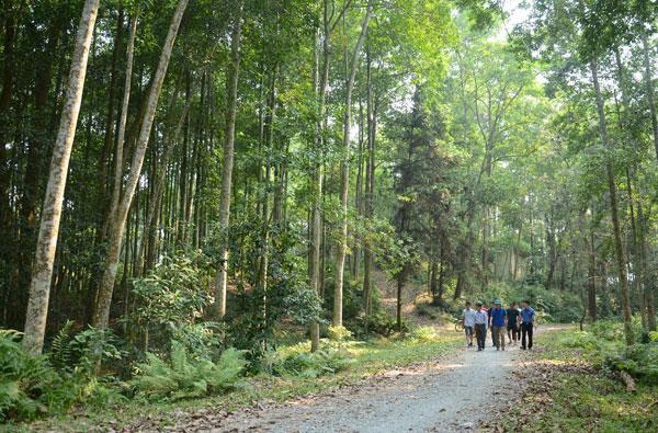 Đoàn khảo sát các tuyến đường trên đồi Nhạc Sơn, thành phố Lào Cai.
