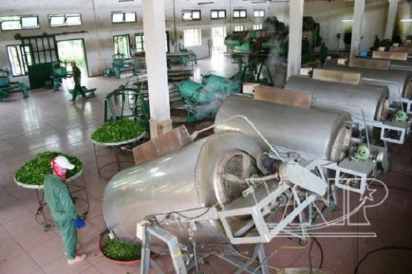 Để khẳng định thương hiệu chè Thái Nguyên, nhiều doanh nghiệp, cơ sở sản xuất chè trên địa bàn tỉnh đã và đang tích cực đầu tư máy móc, thiết bị hiện đại vào sản xuất