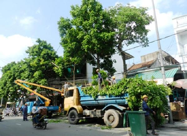 Hà Nội đã cắt tỉa trên 18 nghìn cây xanh trước mùa mưa