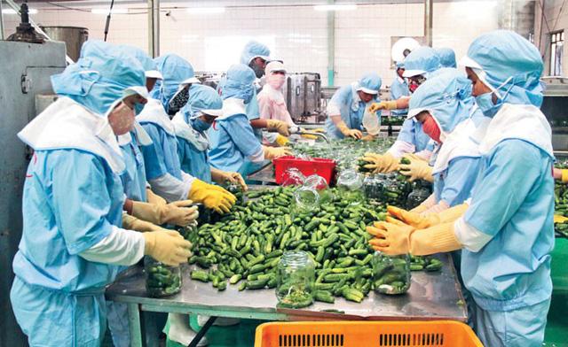 khuyến nghị hoạt động xuất khẩu hàng nông sản, thủy sản sang Trung Quốc