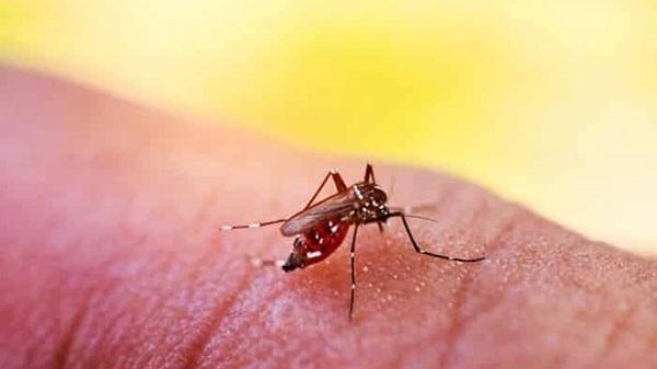 Số ca sốt xuất huyết tăng nhanh, xuất hiện 3 ổ dịch phức tạp