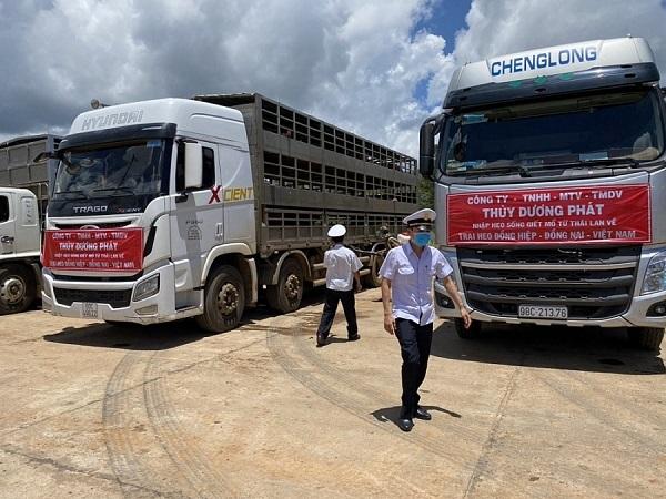 Lô lợn sống đầu tiên đã được nhập khẩu vào Việt Nam qua cửa khẩu Bờ Y, tỉnh Kon Tum