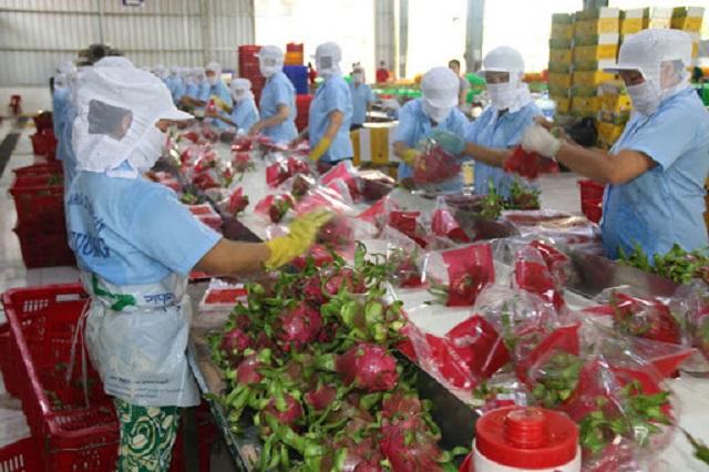 Chi phí logistics cho nông sản Việt Nam quá cao, lên tới 25% tổng giá trị hàng hóa ở một số mặt hàng
