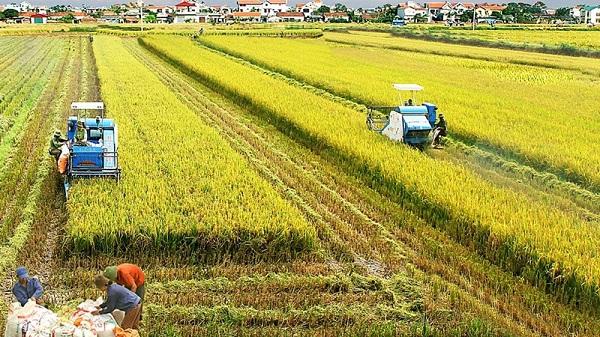 Bộ tài chính giảm từ 20 - 50% mức phí trong lĩnh vực trồng trọt và giống cây lâm nghiệp (Ảnh minh họa)