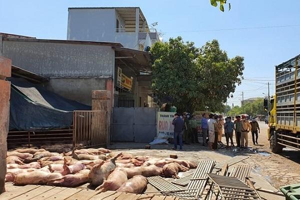 Hiện toàn bộ số lợn chết đã được cơ quan chức năng tiêu hủy.