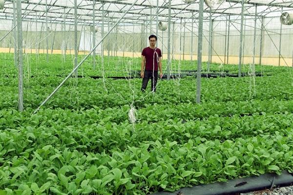 Ứng dụng công nghệ cao vào sản xuất nông nghiệp tại Nghệ An vẫn chưa xứng với tiềm năng