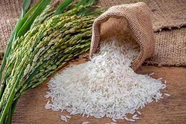 Giá lúa gạo xuất khẩu có xu hướng tăng