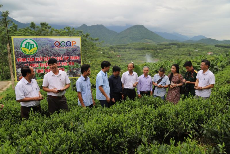 Mô hình vườn cây ăn trái kết hợp với du lịch sinh thái tại xóm Khe Đù, xã Phúc Thuận, thị xã Phổ Yên.
