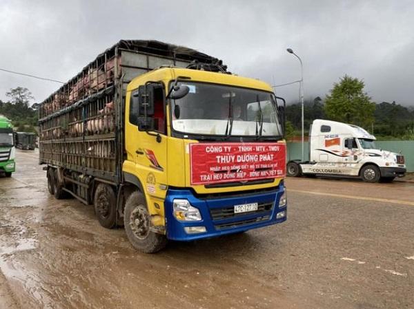 Nhập thêm heo sống sẽ đưa giá thành heo hơi trên thị trường giảm xuống, chia sẻ bớt khó khăn cho người tiêu dùng Việt