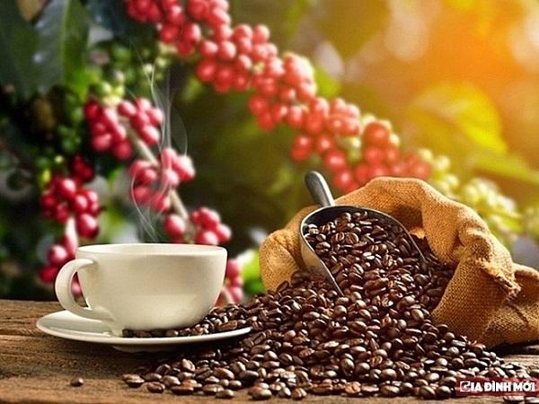 Giá cà phê tăng gần 1.000 đồng/kg