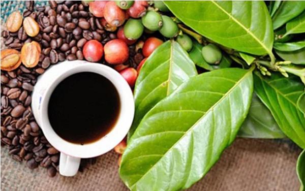 Giá tiêu tăng 1.000 đồng/kg, cà phê đi ngang (Ảnh minh họa)