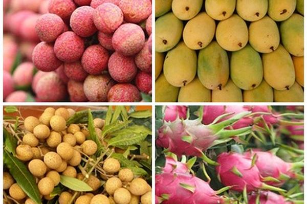 Thiếu nhân viên kiểm dịch khiến quá trình xuất khẩu trái cây của Việt Nam bị ngưng trệ
