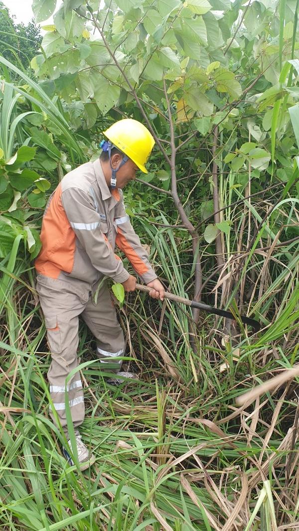 Công nhân Đội QLVHLĐCT Quảng Ninh phát quang hành lang tuyến