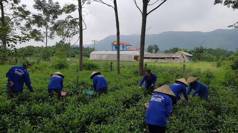 Thành phố Sông Công đang hỗ trợ HTX chè Cao Sơn (xã Bình Sơn) hoàn thiện hồ sơ để đưa các sản phẩm trà tham gia dự thi OCOP của tỉnh