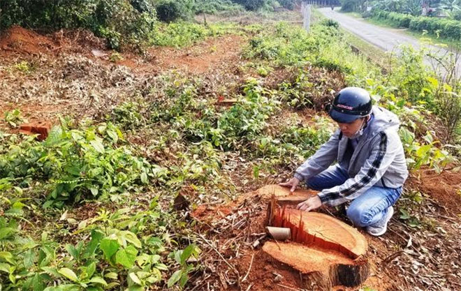 Hiện trường vụ hủy hoại rừng