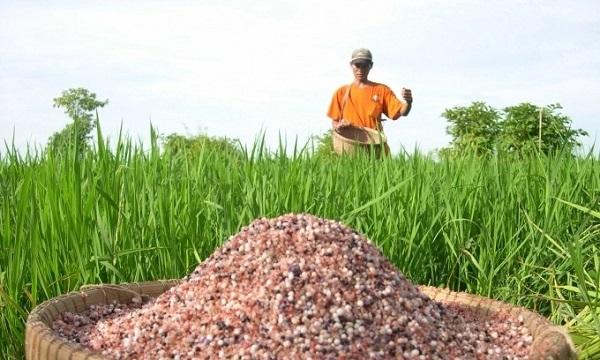 Khi mua và sử dụng phân bón kém chất lượng sẽ khiến thất thu vụ mùa, cây trồng hỏng hoặc chết ảnh hưởng lớn tới kinh tế