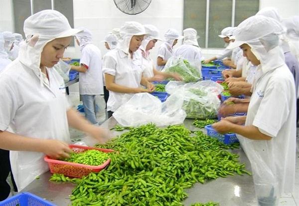 Kim ngạch xuất khẩu rau quả đạt gần 2,26 tỷ USD trong 8 tháng  (Ảnh minh họa)