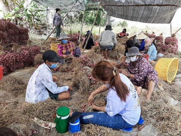 Hành tím là đặc sản của thị xã Vĩnh Châu và là một trong số các sản phẩm chủ lực, có giá trị kinh tế cao, giữ vai trò quan trọng đối với sự phát triển kinh tế - xã hội của tỉnh Sóc Trăng