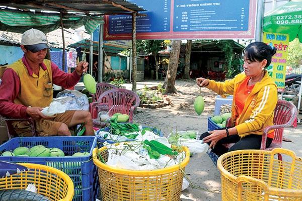 Thu mua xoài cát Hòa Lộc tại một vựa thu mua xoài ở xã Thới Hưng, huyện Cờ Đỏ, TP Cần Thơ.