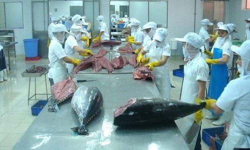 Xuất khẩu cá ngừ tăng trở lại